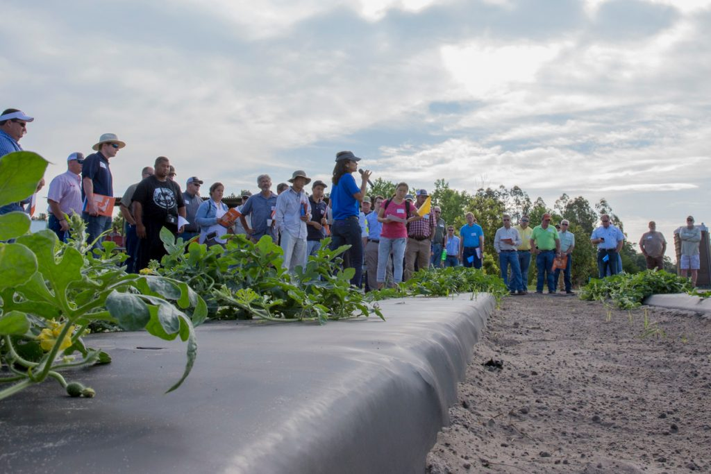 Group of researchers gather at watermelon plot